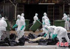 香港销毁4000多只活家禽 预防禽流感